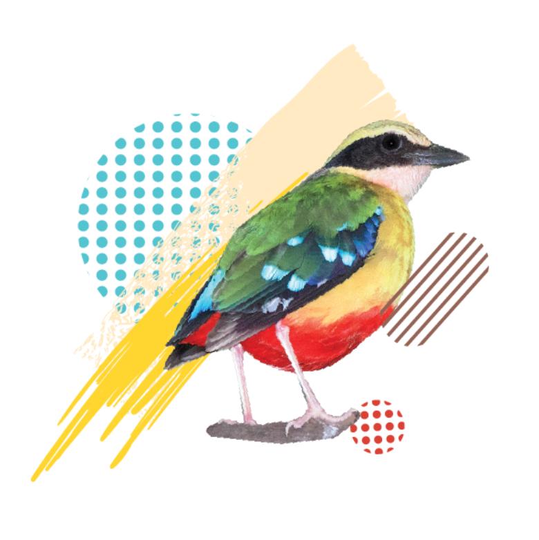 pitta birdy