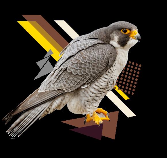 kasker birdy