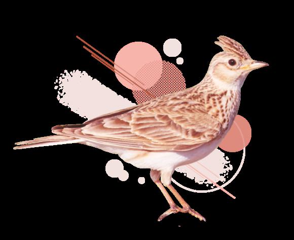 zelda birdy